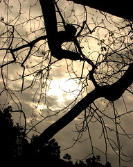 Can you see what I see? (♡ Popotito ♡) Tags: sky naturaleza sun tree sol southamerica nature argentina silhouette clouds arbol buenosaires branch branches cielo nubes silueta soe rama ramas bosquesdepalermo elrosedal platinumphoto popotito