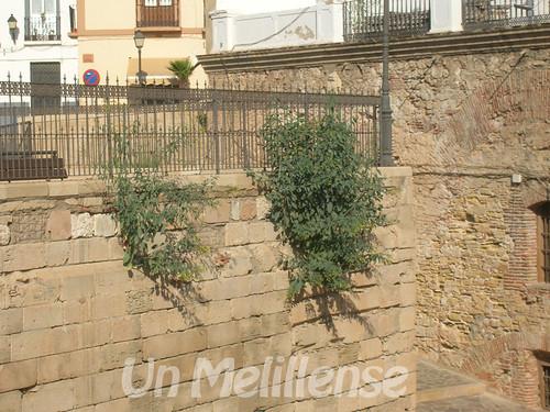 murallas a