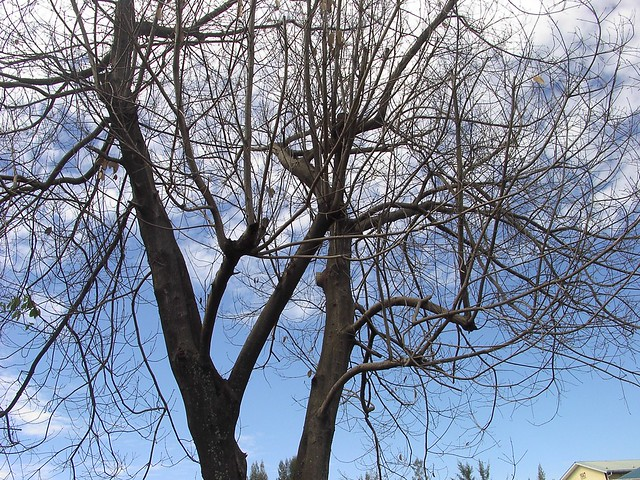 IM005879 Dead Tree,枯树