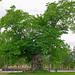 2010-05-22 06-05 Schweden 0779 Vimmerby, Astrid Lindgrens Näs