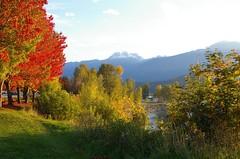 Columbia  River, Revelstoke (davidneal) Tags: columbiariver