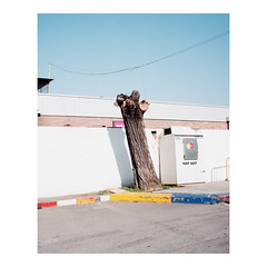 (Salva Lpez) Tags: tree voigtlander bessa medium format 6x7 gasolinera transurbanismes salvalpez