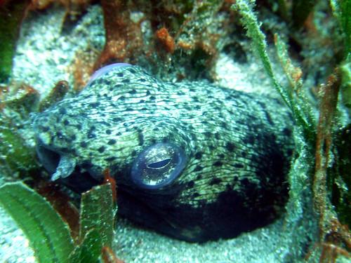 snake eel2