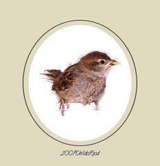 Visitor 2 (Child of the King Photography) Tags: fab birds magicofaworldinmacro thatsclassy