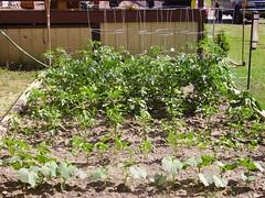 Garden- June 21