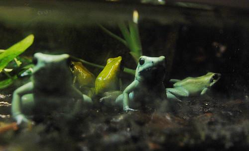 Frogs at Skansen Aquarium