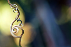 treble clef (lawatt) Tags: vine twirl sonomacounty curl grape creamme sonomastate cmmusic
