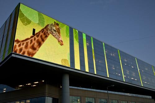 Giraffes Don't Huff