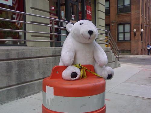Bearly Trash