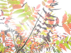 (the_lifestyle_of_Bryan) Tags: autumn fall sumac