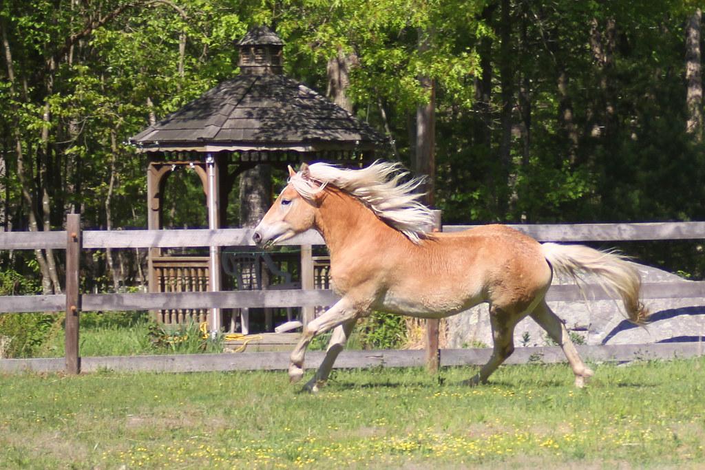 horses 193x