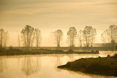 Dike Morning 1 (showbizinbc) Tags: mist misty fog sunrise river bc earlymorning mapleridge dike pittmeadows excapture quarzoespecial