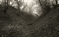 by the way (glasseyes view) Tags: autumn bw fall leaves forest arm knot sw defile