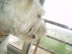 Observando la lluvia tras el cristal