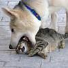 Como el perro y el gato (Fotourbana) Tags: dog cat fear perro gato miedo lucha supershot 25faves animalkingdomelite abigfave fotourbana anawesomeshot impressedbeauty goldenphotographer diamondclassphotographer flickrdiamond superlativas