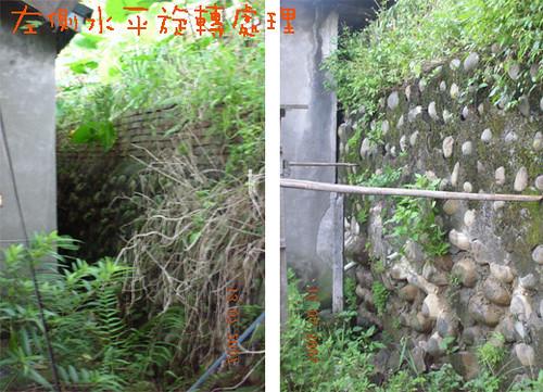 反省舍後方擋土牆比較,地瓜豆拍攝。