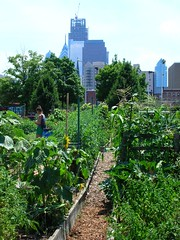 City farm against skyline