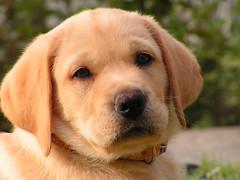 my dog (ivanav) Tags: dog mydog