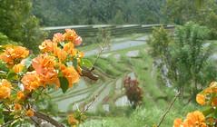 Hidden rice fields (ameland 1732) Tags: flowers boy sea people bali woman lake holiday men girl indonesia landscape sand mask paddy ceremony ricefields braid ameland1732