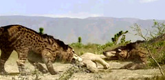 07 Andrewsarchus dont wanna share food