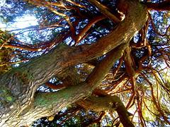 Arbre - Albero - Tree (dafres) Tags: wood sky sun tree switzerland lausanne fabulous picturesque diamondclassphotographer flickrdiamond
