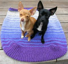 Big Bag w/ Puppies (brookesinnes) Tags: dogs bag puppies knitting felting chihuahuas