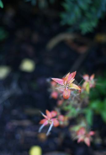Autumn Colours -1