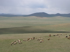 First sign of Mongolian herders on the steppe.