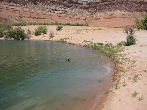 Lake Powell 2010 097