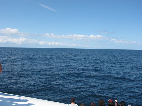 Whale watch, Gold Coast Australia