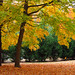 Fall: Burdette Park