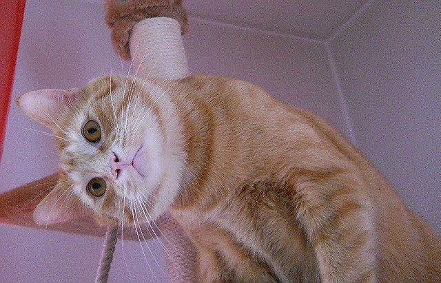 cute and funny ginger cat tilting his head
