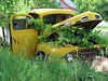 Old yellow ford (Observe The Banana) Tags: door old ford grass minnesota yellow truck vines rust farm vehicle hood derelict grapeines