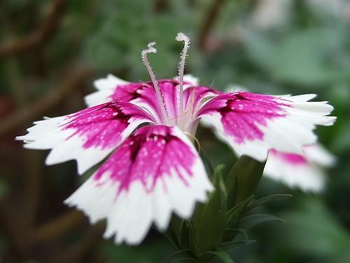 2007_0811F1隨手拍攝的小花