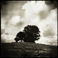 Lonesome (Parcelpacker) Tags: tree holga cornwall lith hp5 coombe palabra microphen