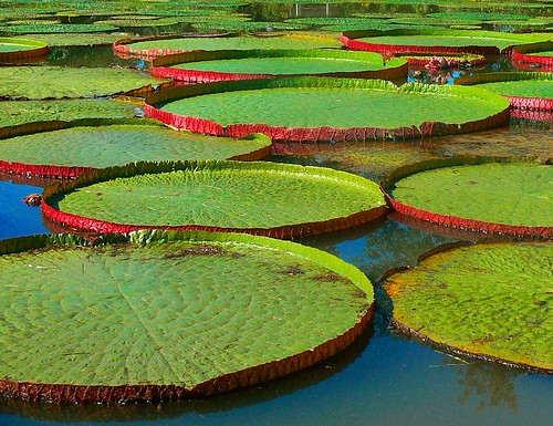 Lily Pad Stepping Stones