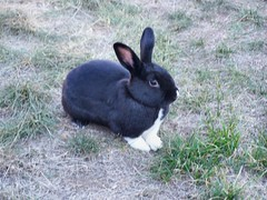 Handsome Jupiter (TamanduaGirl) Tags: rabbit bunny jupiter