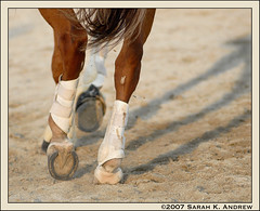 Rhythm (Rock and Racehorses) Tags: shoe september pa devon hooves dressage piaffe mywinner dressageatdevon anawesomeshot