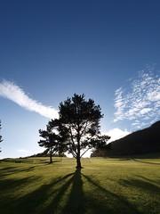 Pitlochry Golf Course and Craigower (Gordon Haws) Tags: trees june scotland highlands perthshire sunburst pitlochry scottishwildflowers perthkinross pitlochrygolfcourse criagower