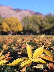 Moon's  Arisin' (photo61guy) Tags: autumn leaves yellow utah fallcolors coth natureplus flickrestrellas mygearandmepremium mygearandmebronze mygearandmesilver mygearandmegold