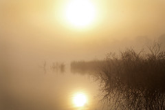 Morning Mist (Theresa Elvin) Tags: morning autumn mist lake water dawn doncaster platinumphoto hatfieldmoor englishnatureshumberheadpeatlandsnationalnaturereserve
