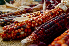 Maz (M. Isaacs Photography) Tags: detail colors corn vegetable dried maz nikond40only