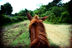 Runaway Bay (Kerrie Lynn Photography (Sugaree_GD)) Tags: horse lomo riding jamaica horseback naturesfinest runawaybay abigfave onlyyourbestshots sugareegd flickrphotoaward onlythebestare horsecam zemmy coolestphotographers