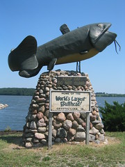 World's Largest Bullhead Fish