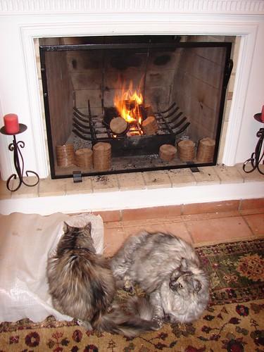 gatas perto da lareira  ~  cats at fireplace