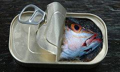 Canned Fish (Protection Island) Tags: wild fish photoshop tin can canned