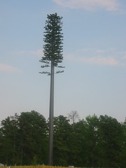 disguised cell phone tower