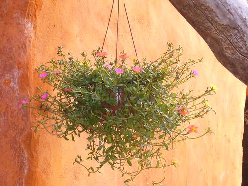 300 graines pourpier vari 233 224 grandes fleurs floraison abondante ebay