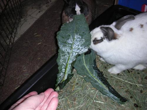 My Kale!