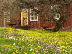 (evisdotter) Tags: flowers house nature blommor mariehamn land vanagram vernsstugan
